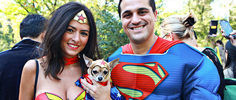 NYC's Adorable Dog Halloween Parade
